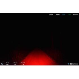 Lupine Blika R Lampenkopf